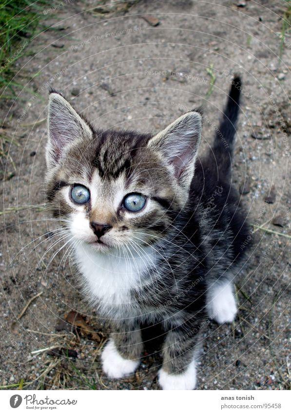 Deine Blauen Augen... Katze klein niedlich Fell verloren Einsamkeit Haustier Miau Suche unschuldig Säugetier Tierjunges Katzenbaby Hauskatze Außenaufnahme