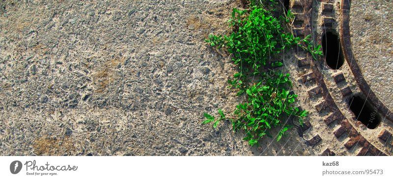 Pflanzen Natur grün Wasser ruhig schwarz Straße Wege & Pfade Hintergrundbild grau braun 2 Kraft Kreis