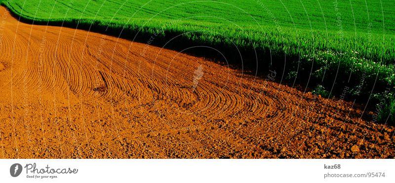 Feld Natur grün rot Umwelt Wege & Pfade Linie braun Hintergrundbild Arbeit & Erwerbstätigkeit Feld Erde Bodenbelag Spuren Landwirtschaft Grenze Weizen
