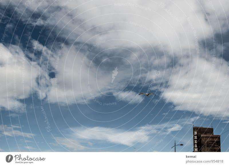 Dream Himmel blau Stadt Sommer Wolken Haus Tier Vogel Fassade Hochhaus frei frisch Schriftzeichen Schönes Wetter Straßenbeleuchtung Möwe