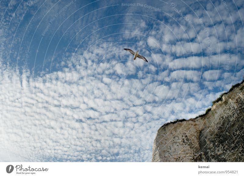 Flying by Himmel Natur blau Sommer Landschaft ruhig Wolken Tier Umwelt Küste Gras Freiheit fliegen oben Felsen Vogel