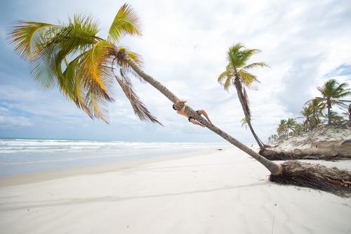 Klammeraffe Ferien & Urlaub & Reisen Ferne Sommerurlaub Sonnenbad Körper 1 Mensch Landschaft Sand Wasser Himmel Wolken Horizont Schönes Wetter Baum Wellen Küste