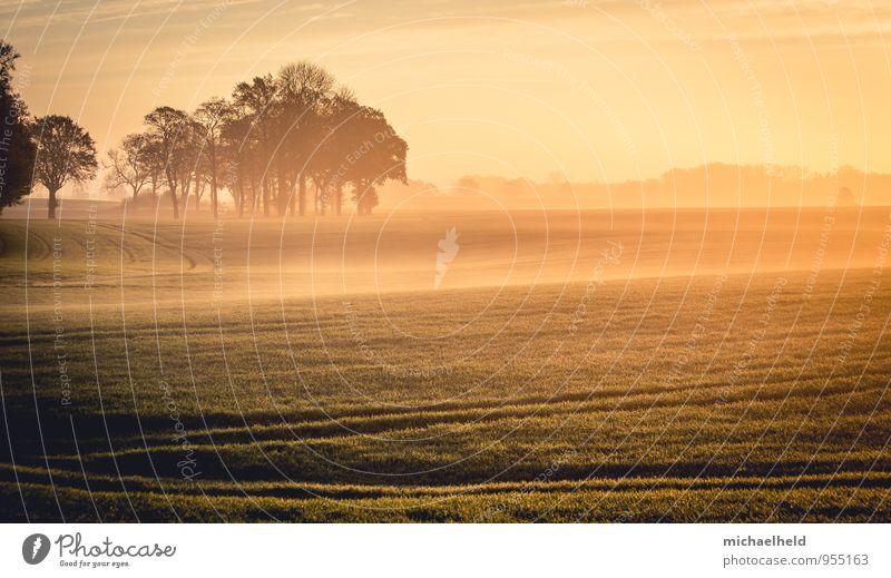 Wenn die Sonne und der Nebel ... Umwelt Natur Landschaft Sonnenaufgang Sonnenuntergang Sonnenlicht Herbst Baum Feld Gefühle Zufriedenheit Kraft Romantik