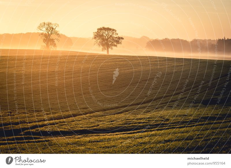 Im Frühtau zu Berge ... Umwelt Natur Landschaft Sonnenaufgang Sonnenuntergang Sonnenlicht Herbst Baum Gras Feld östliches Hügelland Hoffnung Glaube demütig