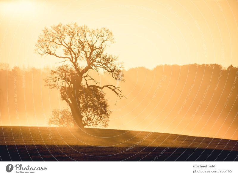 Im Frühtau zu Berge ... Umwelt Natur Landschaft Sonnenaufgang Sonnenuntergang Sonnenlicht Herbst Baum Feld Wald Hoffnung Glaube Trauer Tod Heimweh Fernweh