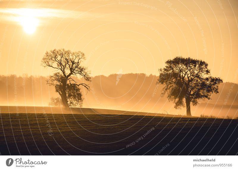 Einsam zweisam Sonnenaufgang Sonnenuntergang Sonnenlicht Herbst Baum träumen Zusammensein Romantik Gelassenheit ruhig Hoffnung Glaube demütig Trauer Ewigkeit