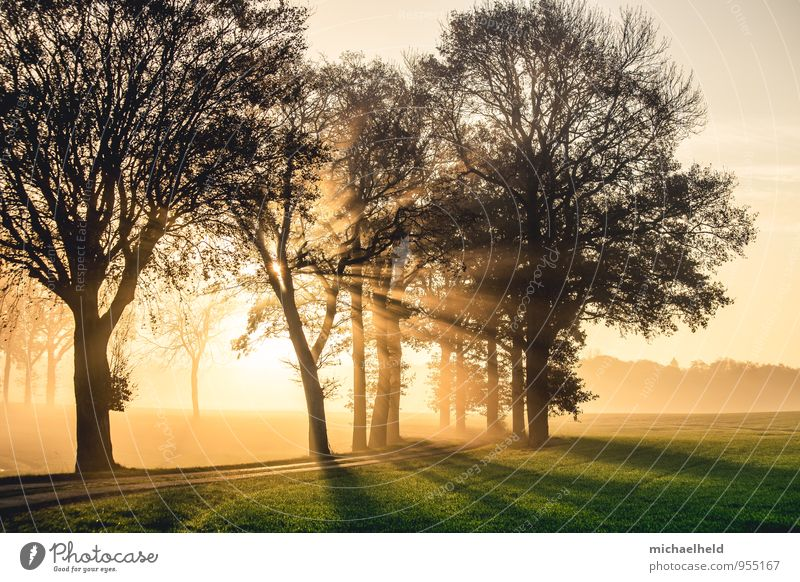 Breakthrough 1 Natur Sonne Baum Erholung Landschaft Wald Umwelt Herbst Gefühle Glück Religion & Glaube Stimmung Feld Hoffnung Vertrauen