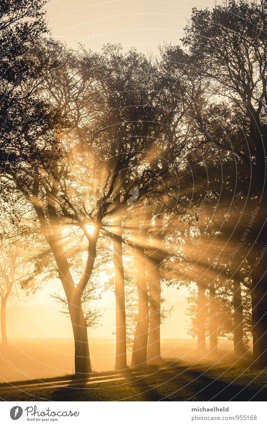 Breakthrough 2 Landschaft Sonnenaufgang Sonnenuntergang Sonnenlicht Herbst Baum Wald Gefühle Hoffnung Glaube demütig Beginn Liebe Morgennebel strahlend