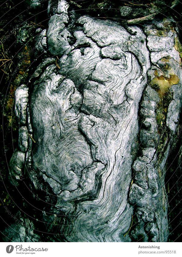 Wurzel?? Umwelt Natur Pflanze Baum Wachstum grau Strukturen & Formen Holz Waldboden flach Flechten Farbfoto Außenaufnahme Menschenleer Tag Schatten Kontrast