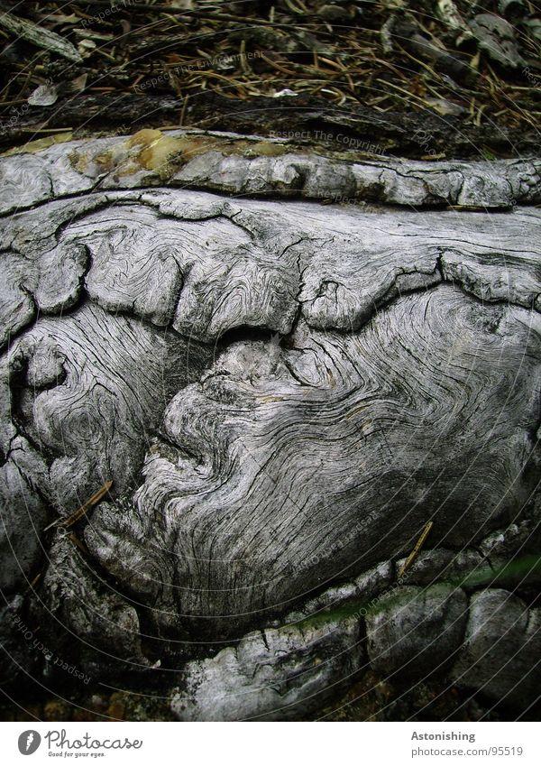 Noch eine Wurzel?? Natur alt Baum Pflanze Holz grau Umwelt Wachstum Boden natürlich fest stark Wurzel Maserung Naturwuchs Totholz
