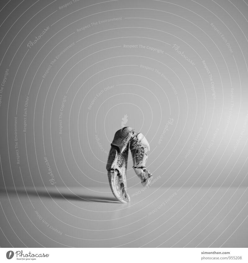 Außerirdischer Natur Ferien & Urlaub & Reisen Ferne Bewegung Kunst träumen elegant Zufriedenheit Energie ästhetisch bedrohlich Kreativität Idee Abenteuer