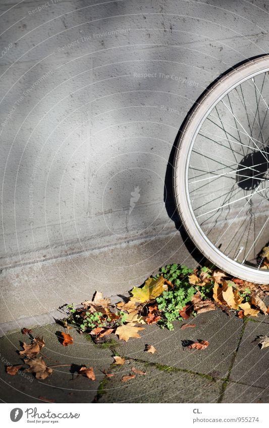 kommt zeit dreht rad Freizeit & Hobby Sport Fahrradfahren Umwelt Natur Herbst Schönes Wetter Blatt Mauer Wand Verkehr Verkehrsmittel Verkehrswege Straße
