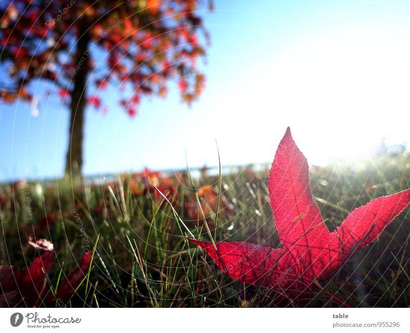 abseits . . . Himmel Natur alt Pflanze Baum rot Blatt Landschaft Umwelt Herbst Wiese Gras natürlich Garten liegen glänzend