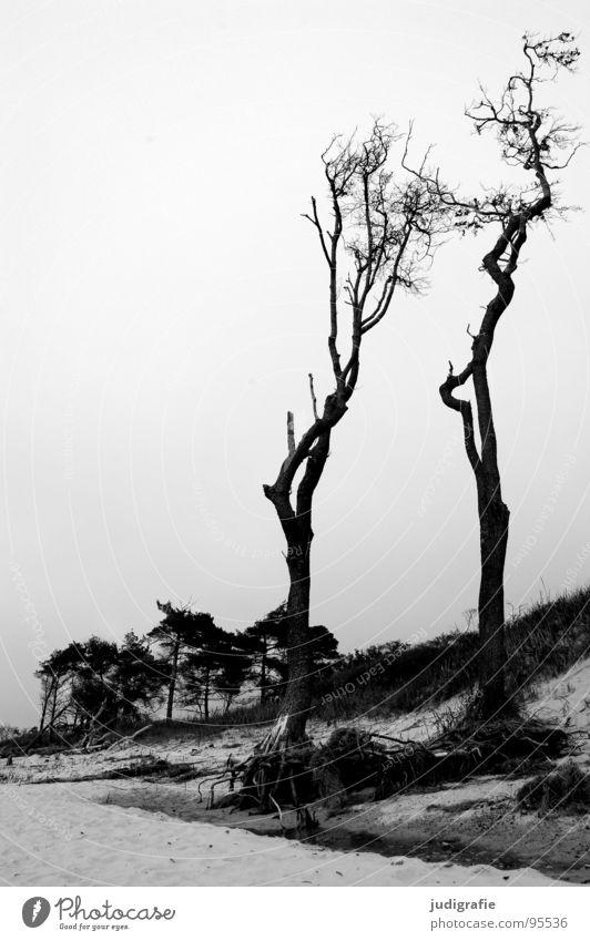 Weststrand Windflüchter Baum Meer Küste Strand Sturm Wald schwarz weiß Fischland-Darß-Zingst grau Schwarzweißfoto Landschaft Ostsee