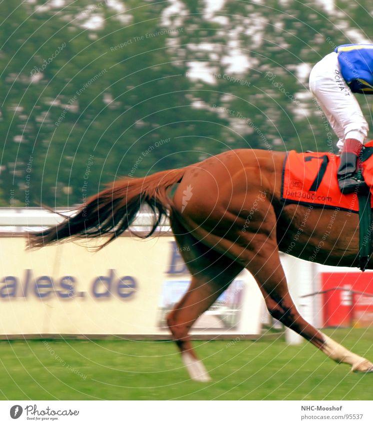 stramme Hintern Pferd Rennbahn Pferderennen Sport Spielen Hinterteil Pferdegangart Muskulatur