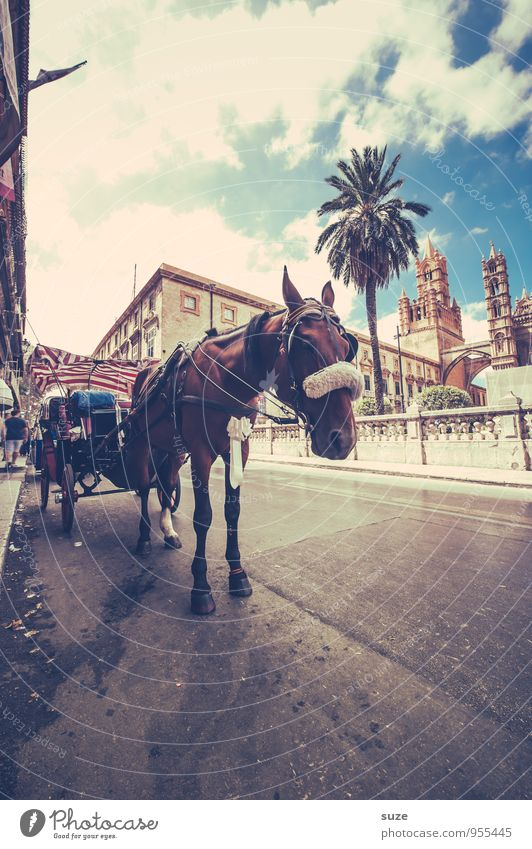 Heute hü und morgen hott Ferien & Urlaub & Reisen Stadt Tier Straße Architektur Stil Lifestyle Tourismus Verkehr trist stehen warten Ausflug Italien Kultur Pferd