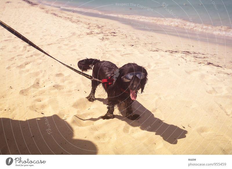 Hot Dog Hund Ferien & Urlaub & Reisen Sommer Meer Freude Tier Strand Küste lustig Stil klein Sand Mode Lifestyle Freizeit & Hobby stehen