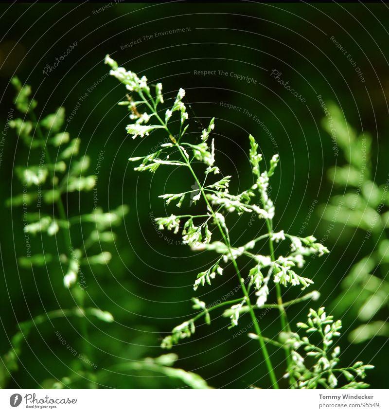 Sommerwald II Natur weiß grün schön Pflanze Blume Farbe Landschaft Wärme Gras Frühling Blüte Garten glänzend nass