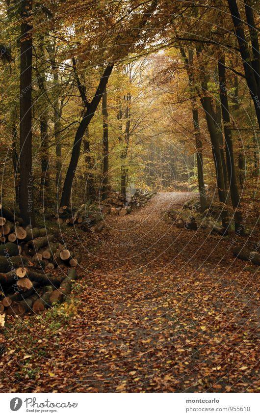 ab in den wald Umwelt Natur Pflanze Erde Herbst Wetter schlechtes Wetter Regen Grünpflanze Wildpflanze Waldboden Baumstamm Blatt entdecken Blick wandern