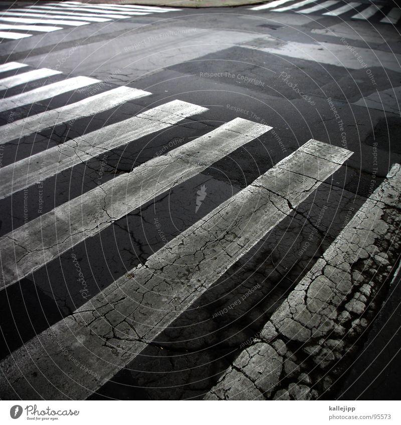 zebra weiß Straße Farbe Wege & Pfade Verkehr gefährlich bedrohlich Asphalt Streifen Respekt Riss Mischung Fußgänger Image Teer Zebra