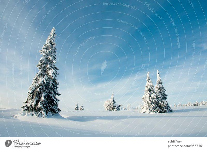 Weihnachtskarte Umwelt Natur Landschaft Pflanze Himmel Wolken Winter Schönes Wetter Eis Frost Schnee Baum kalt blau Tanne mehrere Gruppenzwang Gruppenfoto