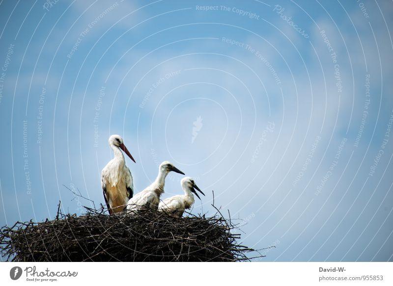 ai ai ai jetzt sind's schon drei Himmel Natur Sommer Wolken Tier Tierjunges gehen Vogel Luft elegant Wildtier warten Baby Tiergruppe Dach sportlich