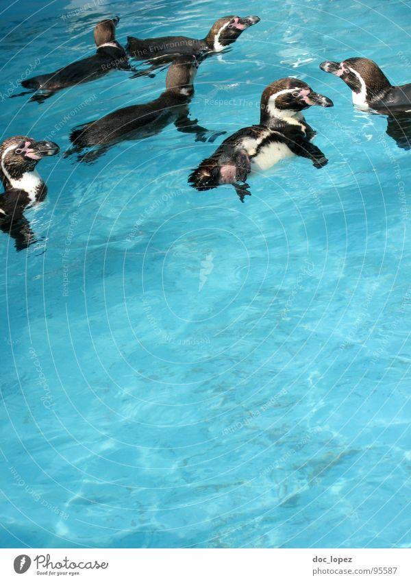 Die Meute Wasser Vogel Netzwerk Pinguin Schwarm Rudel zusammenrotten