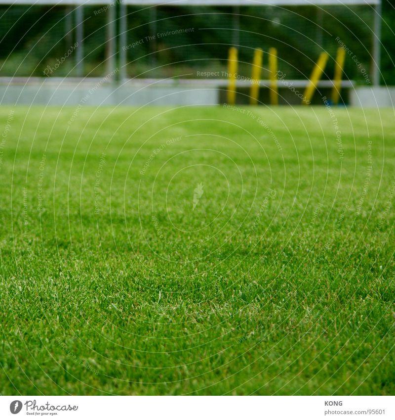 gesperrter platz Gras Sportplatz grün Grünfläche Cottbus Wiese Spielfeld Tiefenschärfe Spielen Ballsport Rasen verein trainingsplatz soccer erste liga