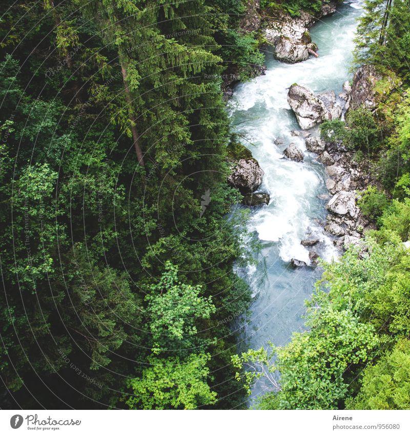 wilder Bach Natur blau grün Wasser Baum Landschaft Wald natürlich Felsen Kraft Urelemente Alpen stark Flussufer