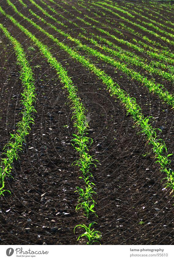 Knick in der Optik Feld braun gepflügt Frühling Kontrast Landwirtschaft Spuren Sommer Weizen Gerste Roggen Bauernhof Ernte Aussaat Saatgut Ferne einfach