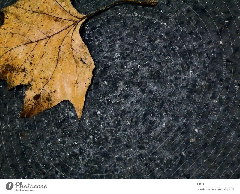 einsamer Herbst Blatt Asphalt grau gelb schwarz Kies Jahreszeiten dunkel Einsamkeit leer Verfall orange Stein Kontrast Tod Farbe Natur Straße