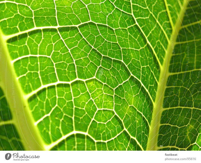 green leave grün Blatt Energiewirtschaft