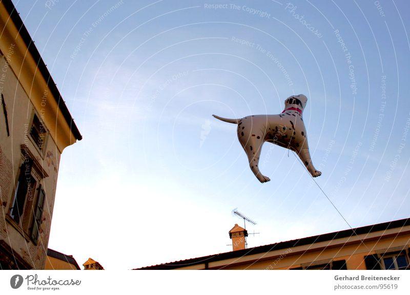 Artgerechte Haltung Hund Dalmatiner Tierschutz aufblasbar Schweben Schnur Zufriedenheit Himmel fliegen überblicken festhalten