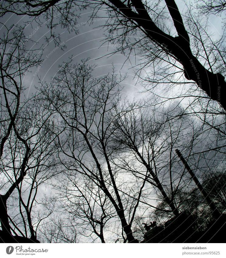 Stille ruhig dunkel Wolken Baum Wolkendecke Umwelt genießen Winter Trauer Stimmung Verzweiflung Frieden Niveau Natur Zweig Ast kein Laut schön Entlaubt