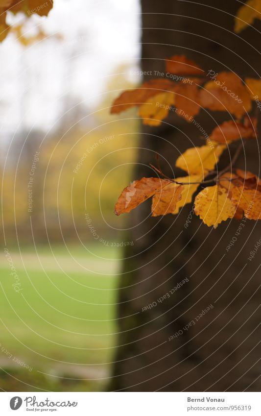 im park Herbst Wetter Baum Gras Blatt Park Wiese Holz hängen nass orange Baumstamm Buche Rasen Zweig Farbfoto Außenaufnahme Menschenleer Textfreiraum links