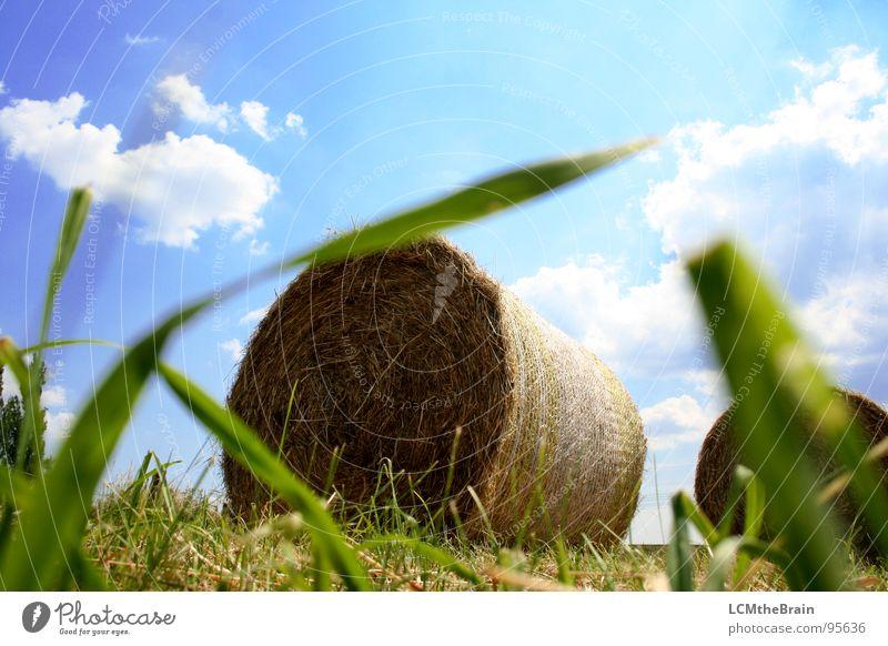 Heu Vs. Traktor Natur Himmel Sonne blau Sommer ruhig Wolken gelb Wiese Gras Landschaft Feld Dorf Landwirtschaft Ernte