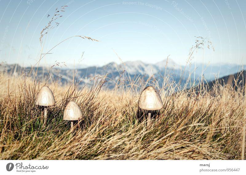 !Trash! | Pilze, bitte nicht mehr! Natur Pflanze Berge u. Gebirge Herbst natürlich Zusammensein Kraft trist authentisch Schönes Wetter Alpen Pilz Grasland standhaft Wildpflanze Grasbüschel