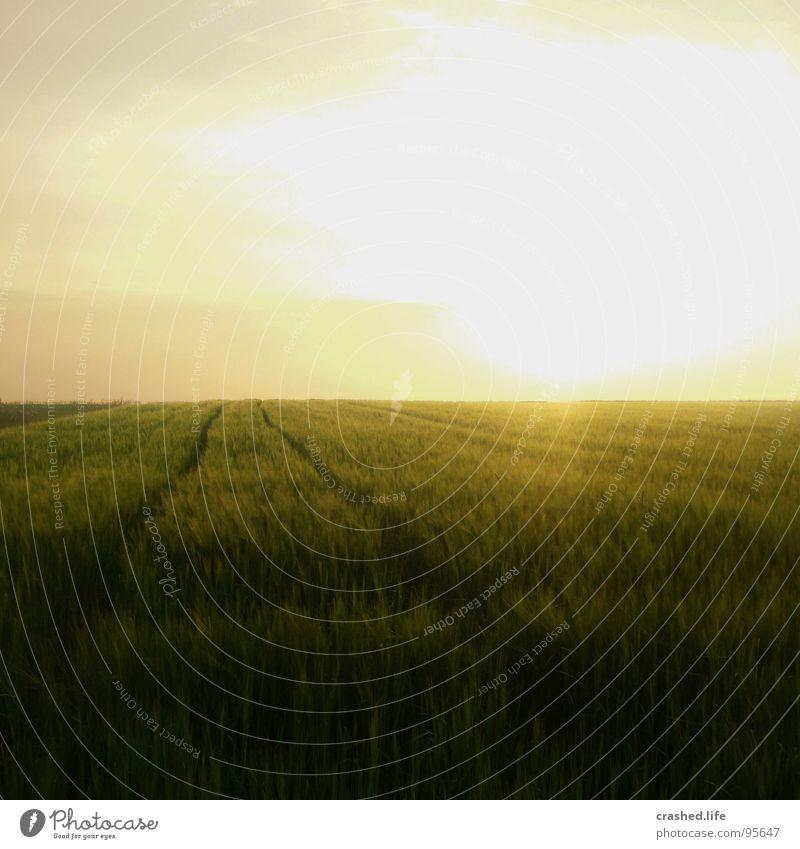 Sundown I Feld Sonnenuntergang Gelbstich gelb grün Gras Ferne Weizen Unendlichkeit Licht Sonnenaufgang Abend Morgen Sonnenstrahlen Sommer Physik Himmel Straße