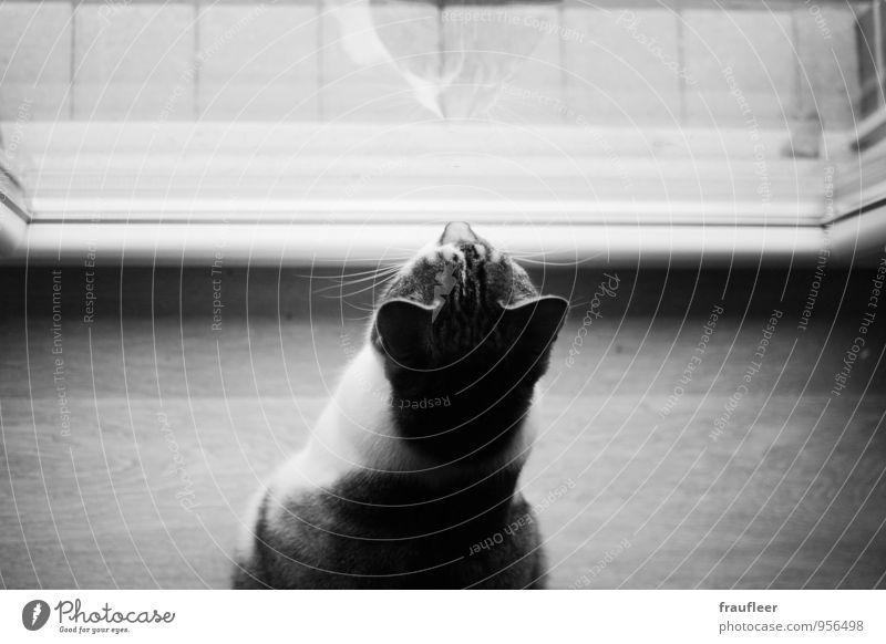 Kater Katze Tier Holz Stimmung Glas Neugier Sehnsucht Wachsamkeit Haustier Interesse