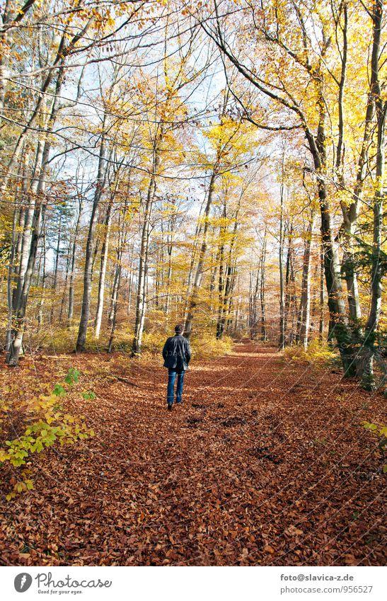 Herbstlicher Wald Ferien & Urlaub & Reisen Freiheit wandern Mensch maskulin 1 Natur Landschaft Pflanze Tier Luft Sonne Sonnenlicht Klima Wetter Schönes Wetter