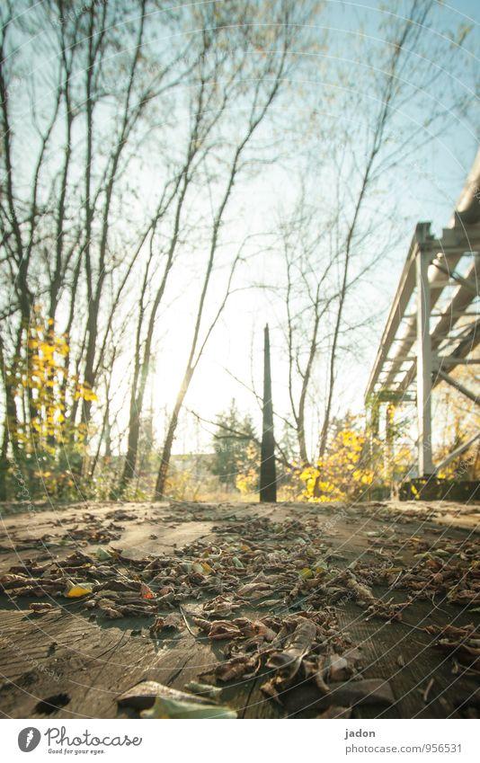 abblättern. Natur Landschaft Pflanze Erde Himmel Sonne Sonnenlicht Herbst Schönes Wetter Baum Blatt Grünpflanze Garten Park mehrfarbig Romantik unbeständig