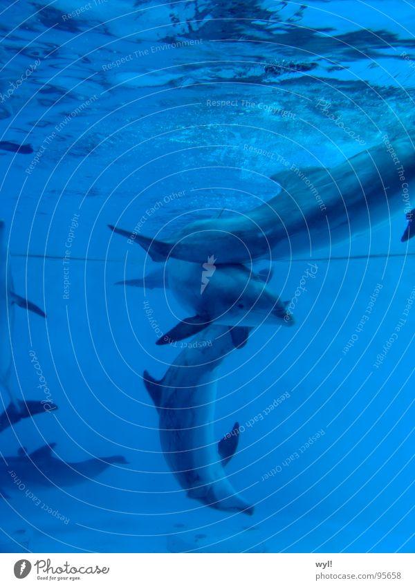 Choreographie der Tiefe Wasser Meer blau Freude Leben See Tanzen Aquarium Säugetier Delphine Wal