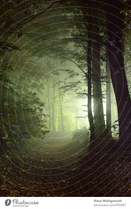 Langzeitbelichtung Natur grün weiß Baum Erholung Blatt schwarz Wald Umwelt gelb Herbst braun Park Nebel Klima