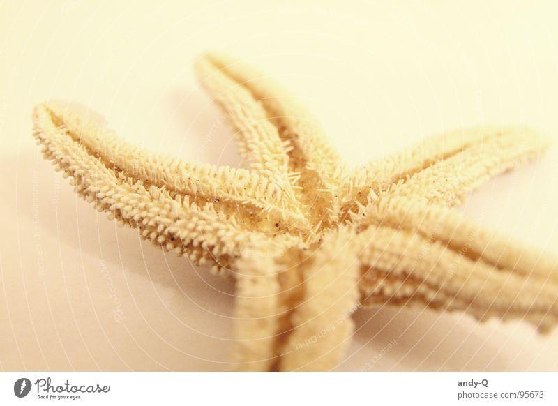 Ein Stern fiel herunter Wasser Meer Sommer Strand gelb Tod Sand hell Küste Fisch Stern (Symbol) 5 Weltall Salz salzig Seestern
