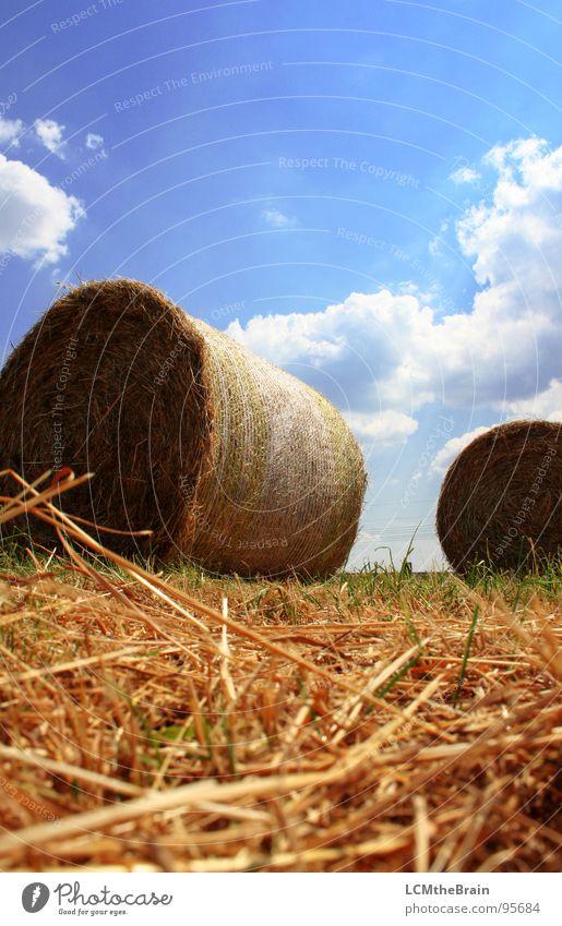 Strohballen Heuballen Sommer Gras Feld gelb Landwirtschaft Wolken Außenaufnahme Dorf Wiese ruhig Natur Himmel Feldaufnahme blau Landschaft Sonne Ernte Hay
