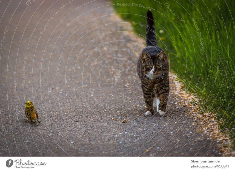Bird and Cat Katze grün Tier Spielen außergewöhnlich gehen fliegen Vogel Freundschaft Angst wild Wildtier warten verrückt Lächeln bedrohlich
