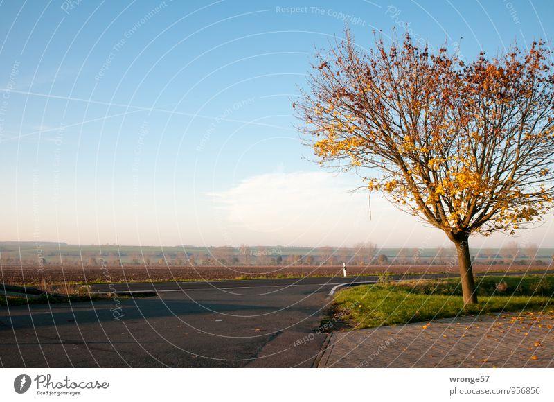 Autofrei blau Baum Wolken gelb Straße Herbst braun Horizont Feld Verkehrswege Straßenbelag herbstlich Parkplatz Blauer Himmel Herbstfärbung Straßenkreuzung