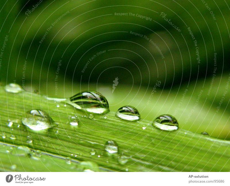 Tropfen *1 Natur grün Wasser ruhig Regen glänzend frisch Wassertropfen Elektrizität nass 3 Seil rund Klarheit nah Teile u. Stücke