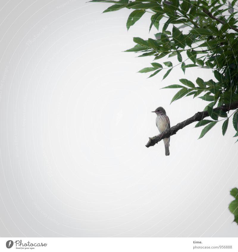 könnte | fliegen | will aber nich Pflanze schön Baum Blatt ruhig Ferne Vogel träumen sitzen warten Flügel beobachten Ast Schutz Tiergesicht Erwartung