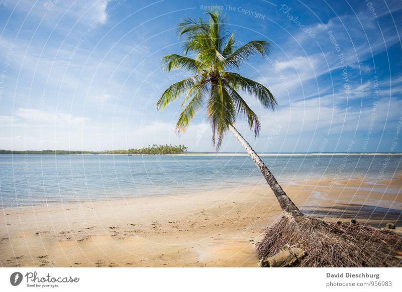 Traumstrand Himmel Natur Ferien & Urlaub & Reisen blau grün weiß Wasser Sommer Baum Meer Landschaft Wolken Strand Ferne schwarz gelb